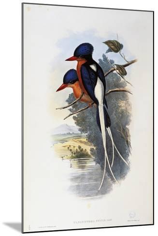 Buff-Breasted Paradise-Kingfisher (Tanysiptera Sylvia)-John Gould-Mounted Giclee Print