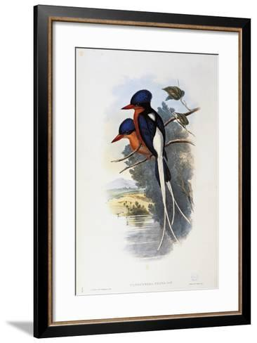 Buff-Breasted Paradise-Kingfisher (Tanysiptera Sylvia)-John Gould-Framed Art Print