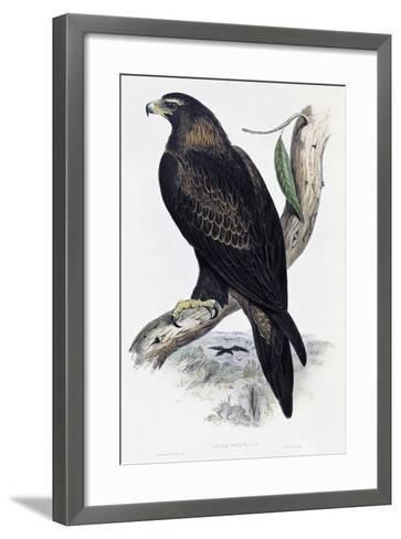 Golden Eagle (Aquila Chrysaetos)-John Gould-Framed Art Print