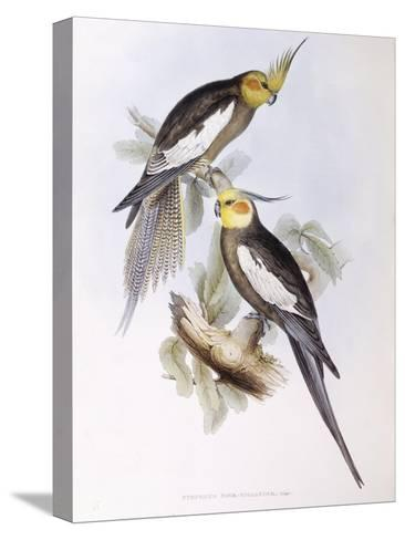 Cockatiel (Nymphicus Hollandicus)-John Gould-Stretched Canvas Print