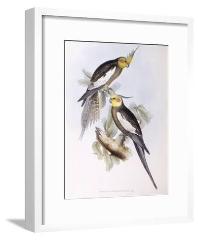 Cockatiel (Nymphicus Hollandicus)-John Gould-Framed Art Print