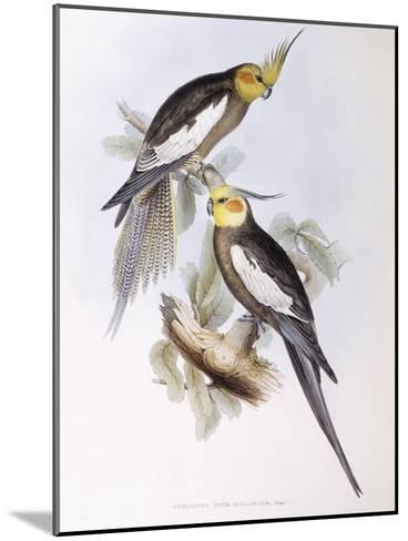 Cockatiel (Nymphicus Hollandicus)-John Gould-Mounted Giclee Print