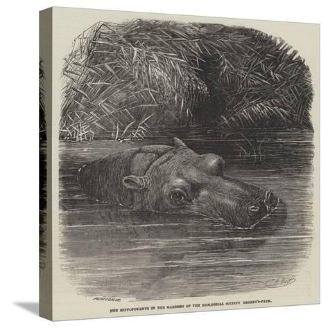 The Hippopotamus in the Gardens of the Zoological Society, Regent'S-Park-Joseph Wolf-Stretched Canvas Print