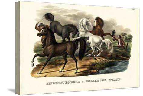 Transylvanian and Hungarian Horses, 1824-Karl Joseph Brodtmann-Stretched Canvas Print
