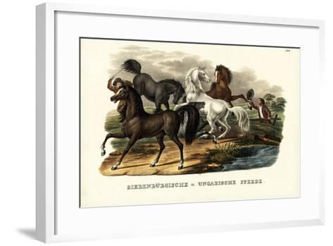 Transylvanian and Hungarian Horses, 1824-Karl Joseph Brodtmann-Framed Art Print