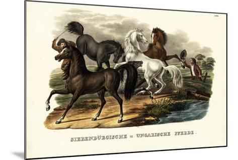 Transylvanian and Hungarian Horses, 1824-Karl Joseph Brodtmann-Mounted Giclee Print
