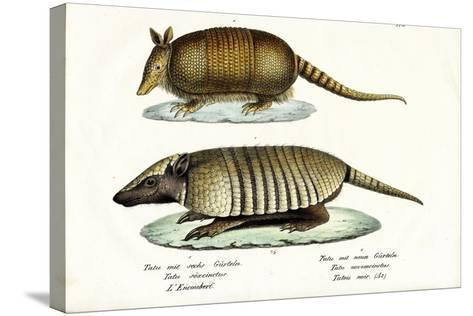 Different Kinds of Armadillos, 1824-Karl Joseph Brodtmann-Stretched Canvas Print