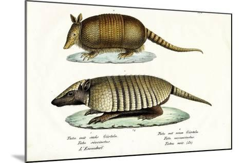 Different Kinds of Armadillos, 1824-Karl Joseph Brodtmann-Mounted Giclee Print