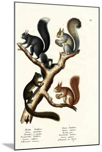 Different Kinds of Squirrels, 1824-Karl Joseph Brodtmann-Mounted Giclee Print