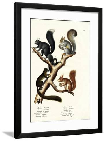 Different Kinds of Squirrels, 1824-Karl Joseph Brodtmann-Framed Art Print