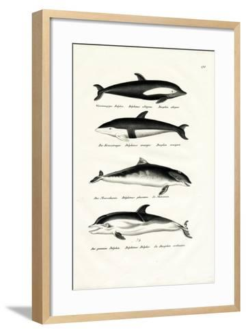 Different Kinds of Dolphins, 1824-Karl Joseph Brodtmann-Framed Art Print