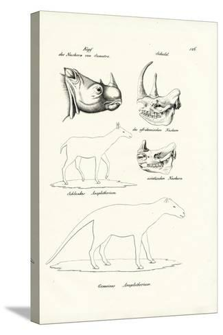 Head of Sumatra-Rhinoceros, 1824-Karl Joseph Brodtmann-Stretched Canvas Print