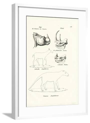 Head of Sumatra-Rhinoceros, 1824-Karl Joseph Brodtmann-Framed Art Print