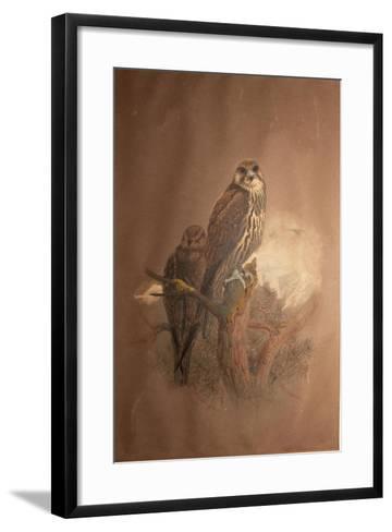 Saker Falcon (Falco Sacer), 1856-67-Joseph Wolf-Framed Art Print