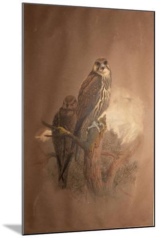 Saker Falcon (Falco Sacer), 1856-67-Joseph Wolf-Mounted Giclee Print