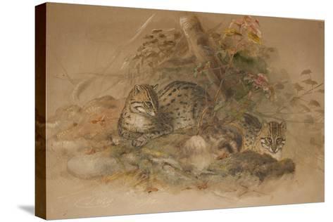 Clouded Leopard (Fleis Macrocelis)-Joseph Wolf-Stretched Canvas Print