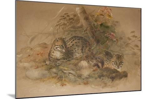 Clouded Leopard (Fleis Macrocelis)-Joseph Wolf-Mounted Giclee Print