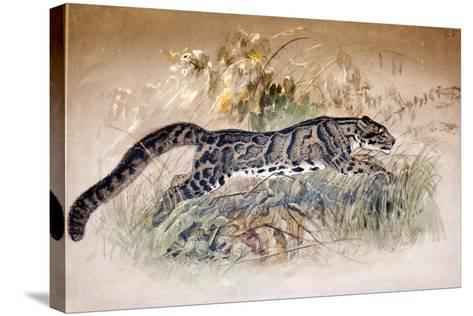 Clouded Leopard, 1851-69-Joseph Wolf-Stretched Canvas Print