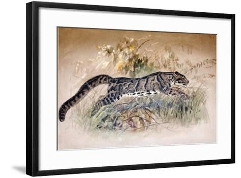 Clouded Leopard, 1851-69-Joseph Wolf-Framed Art Print