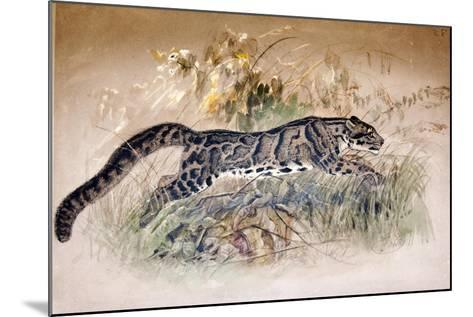Clouded Leopard, 1851-69-Joseph Wolf-Mounted Giclee Print