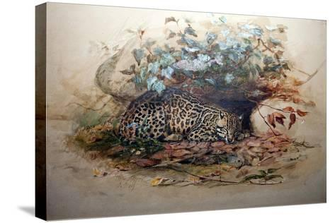 Ocelot, 1851-52-Joseph Wolf-Stretched Canvas Print