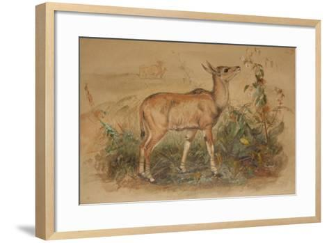 Young Eland-Joseph Wolf-Framed Art Print