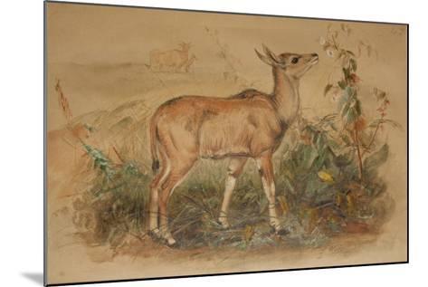 Young Eland-Joseph Wolf-Mounted Giclee Print