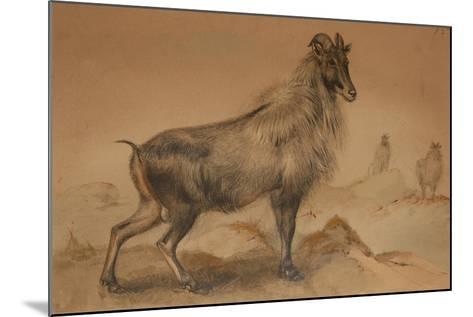Thar-Joseph Wolf-Mounted Giclee Print
