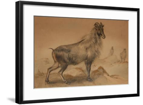 Thar-Joseph Wolf-Framed Art Print