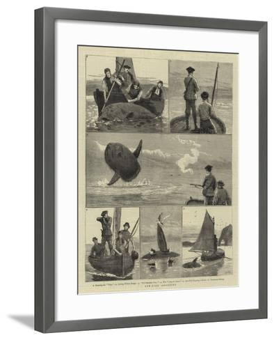 Sun-Fish Shooting-Joseph Nash-Framed Art Print