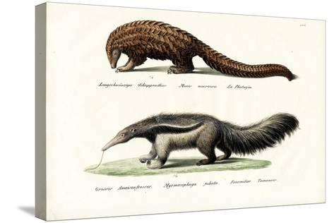 Pangolin Anteater, 1824-Karl Joseph Brodtmann-Stretched Canvas Print