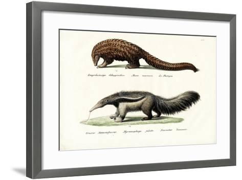 Pangolin Anteater, 1824-Karl Joseph Brodtmann-Framed Art Print
