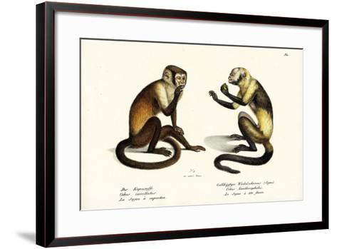 Capuchin Monkey, 1824-Karl Joseph Brodtmann-Framed Art Print