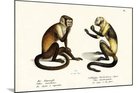 Capuchin Monkey, 1824-Karl Joseph Brodtmann-Mounted Giclee Print