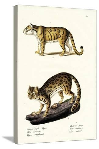 Clouded Leopard, 1824-Karl Joseph Brodtmann-Stretched Canvas Print