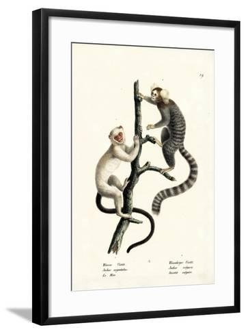 Common Marmoset, 1824-Karl Joseph Brodtmann-Framed Art Print