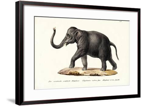 Indian Elephant, 1824-Karl Joseph Brodtmann-Framed Art Print