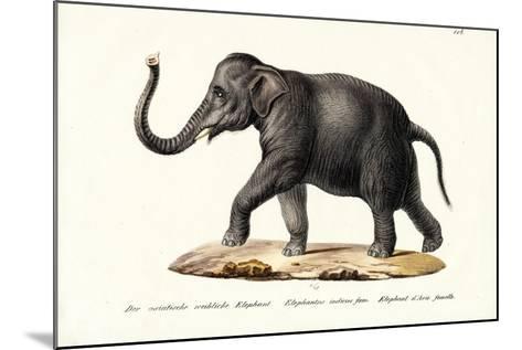 Indian Elephant, 1824-Karl Joseph Brodtmann-Mounted Giclee Print
