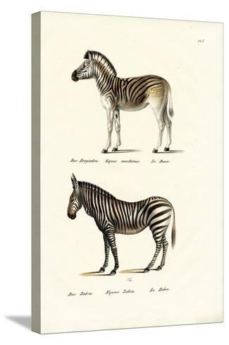 Mountain Zebra, 1824-Karl Joseph Brodtmann-Stretched Canvas Print