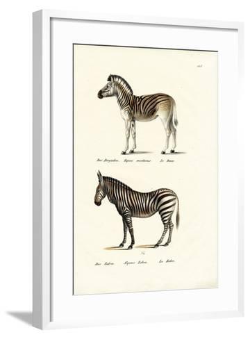 Mountain Zebra, 1824-Karl Joseph Brodtmann-Framed Art Print