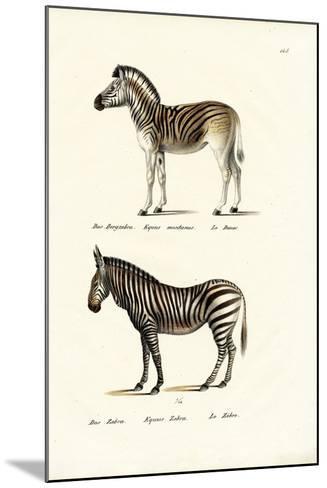 Mountain Zebra, 1824-Karl Joseph Brodtmann-Mounted Giclee Print