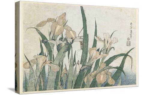 Iris Flowers and Grasshopper, C.1830-31-Katsushika Hokusai-Stretched Canvas Print