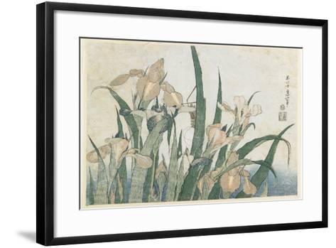 Iris Flowers and Grasshopper, C.1830-31-Katsushika Hokusai-Framed Art Print