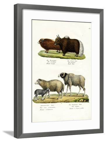 Musk Ox, 1824-Karl Joseph Brodtmann-Framed Art Print