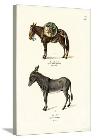 Donkey, 1824-Karl Joseph Brodtmann-Stretched Canvas Print