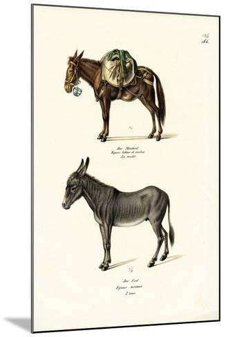 Donkey, 1824-Karl Joseph Brodtmann-Mounted Giclee Print