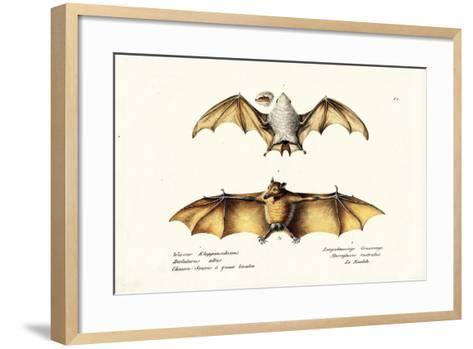 Northern Ghost Bat, 1824-Karl Joseph Brodtmann-Framed Art Print