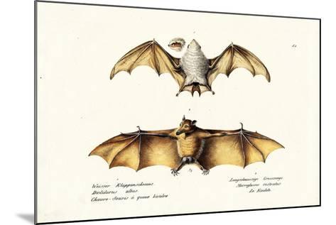 Northern Ghost Bat, 1824-Karl Joseph Brodtmann-Mounted Giclee Print
