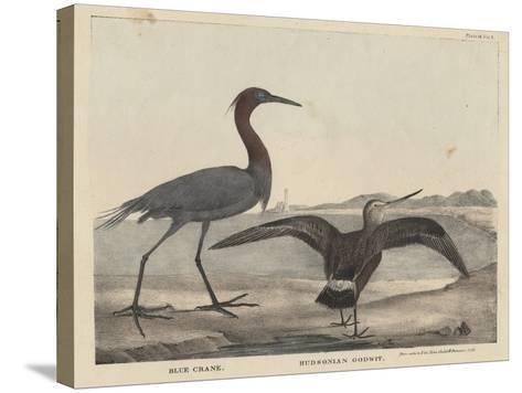 Blue Crane-Mannevillette Elihu Dearing Brown-Stretched Canvas Print