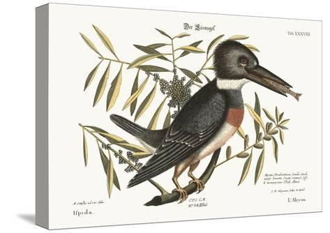 The Kingfisher, 1749-73-Mark Catesby-Stretched Canvas Print